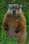 after-a-long-day-groundhog